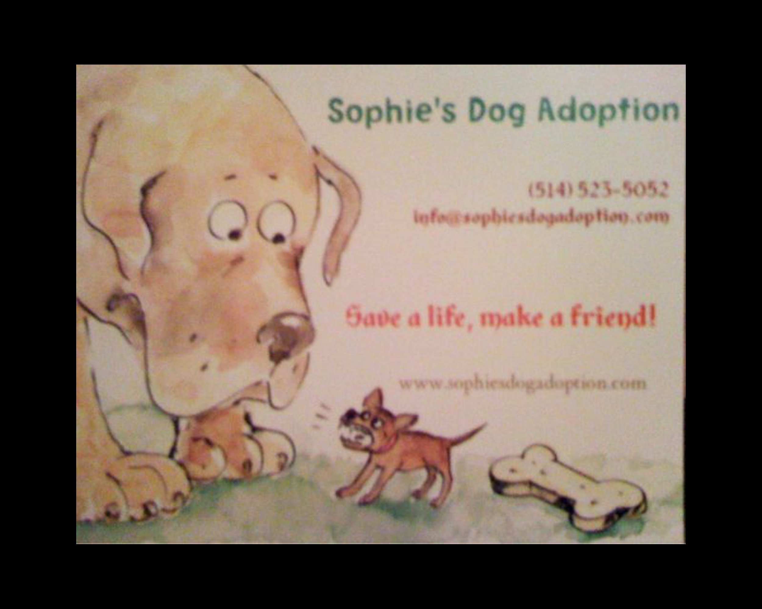 Sophie's Dog Adoption – Reunion 2010!