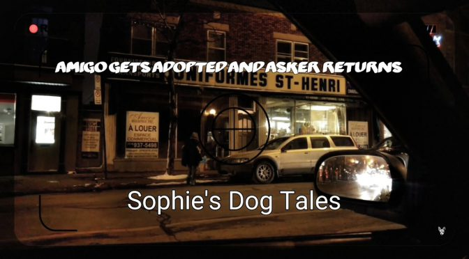 Sophie's Dog Tales – Asker and Amigo